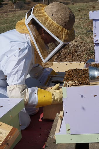Person wearing protective suit looking at bees