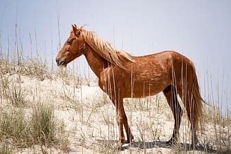 Brown horse at desert under clear sky during daytime