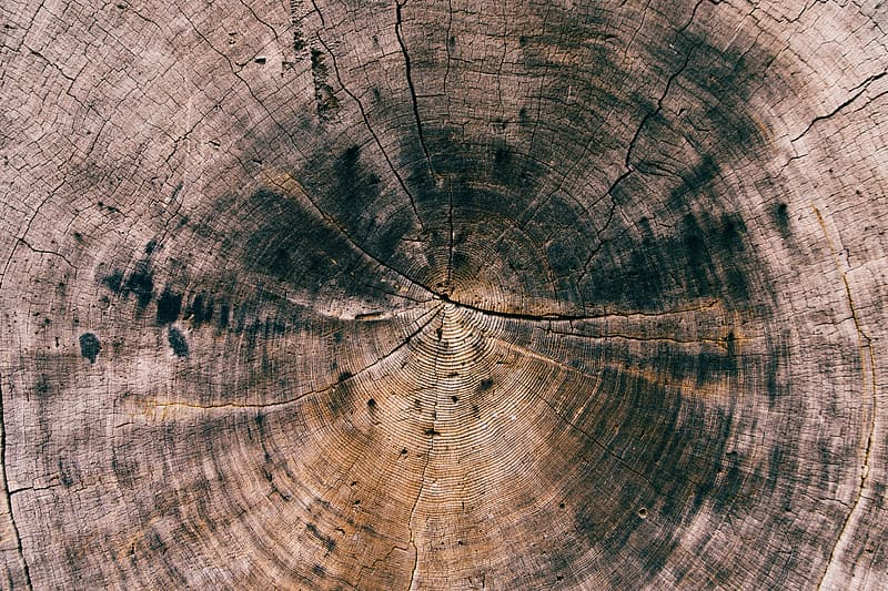 Close-up photo of brown and black wood log