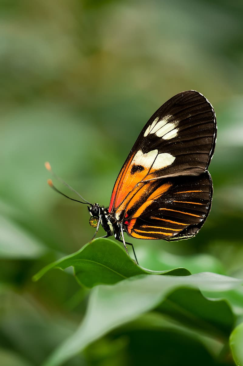 Black and brown butterfly perched on green leaf in closeup photo