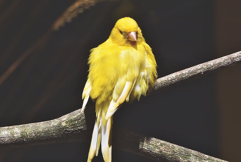 Yellow bird on brown tree branch