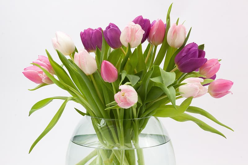 Purple and white tulips on clear glass vase