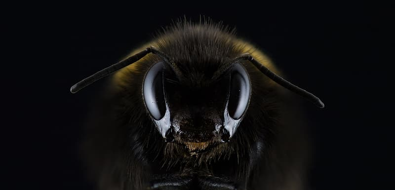 Closeup photo of black and yellow bee