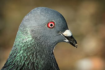 Black and green bird with red beak