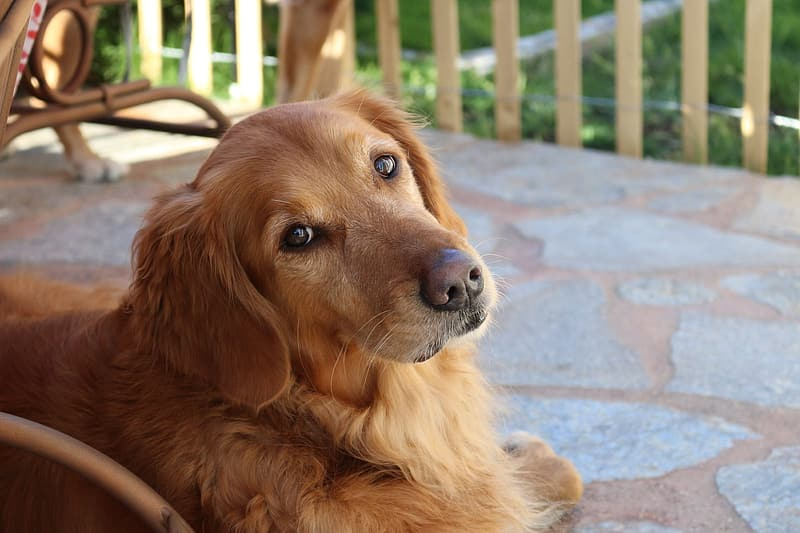 Shallow focus photography of brown medium coated dog during daytime