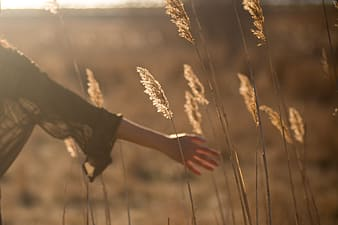 Person touching white pampas grasses