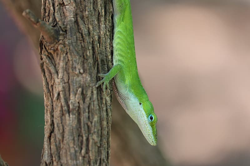 Green lizard on brown tree trunk