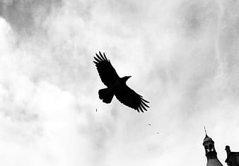 Grayscale photography of flying bird under cloudy sky