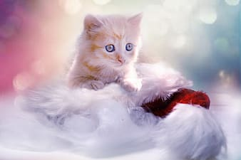 Orange Tabby kitten on white fur