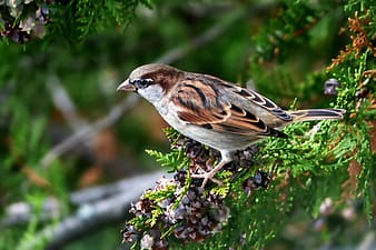 Brown and white bird on green plant