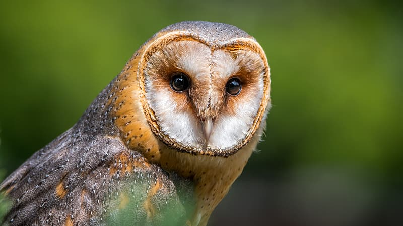 Photo of brown and white owl