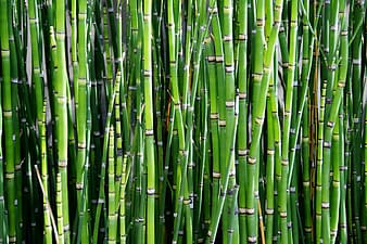 Photographed of bamboos