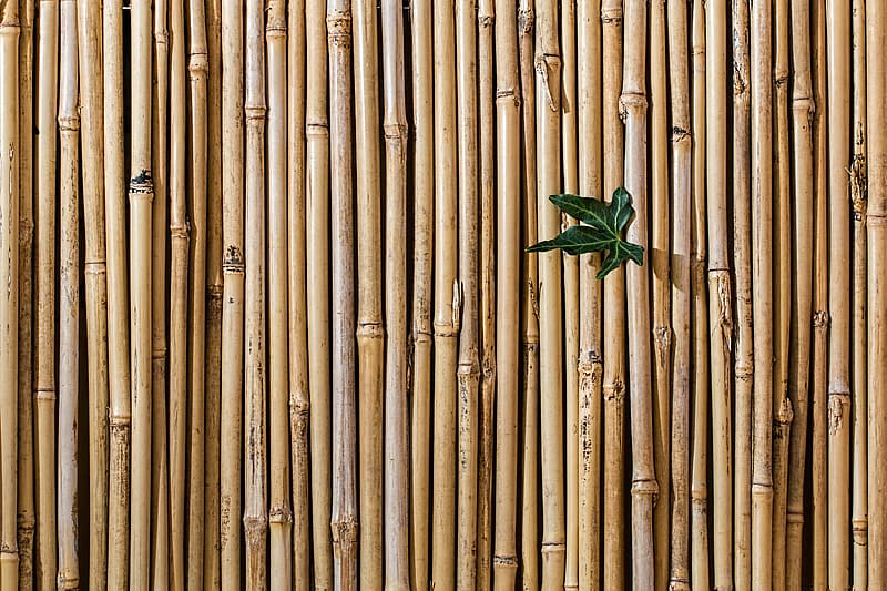 Green leaf  on brown wooden bamboos