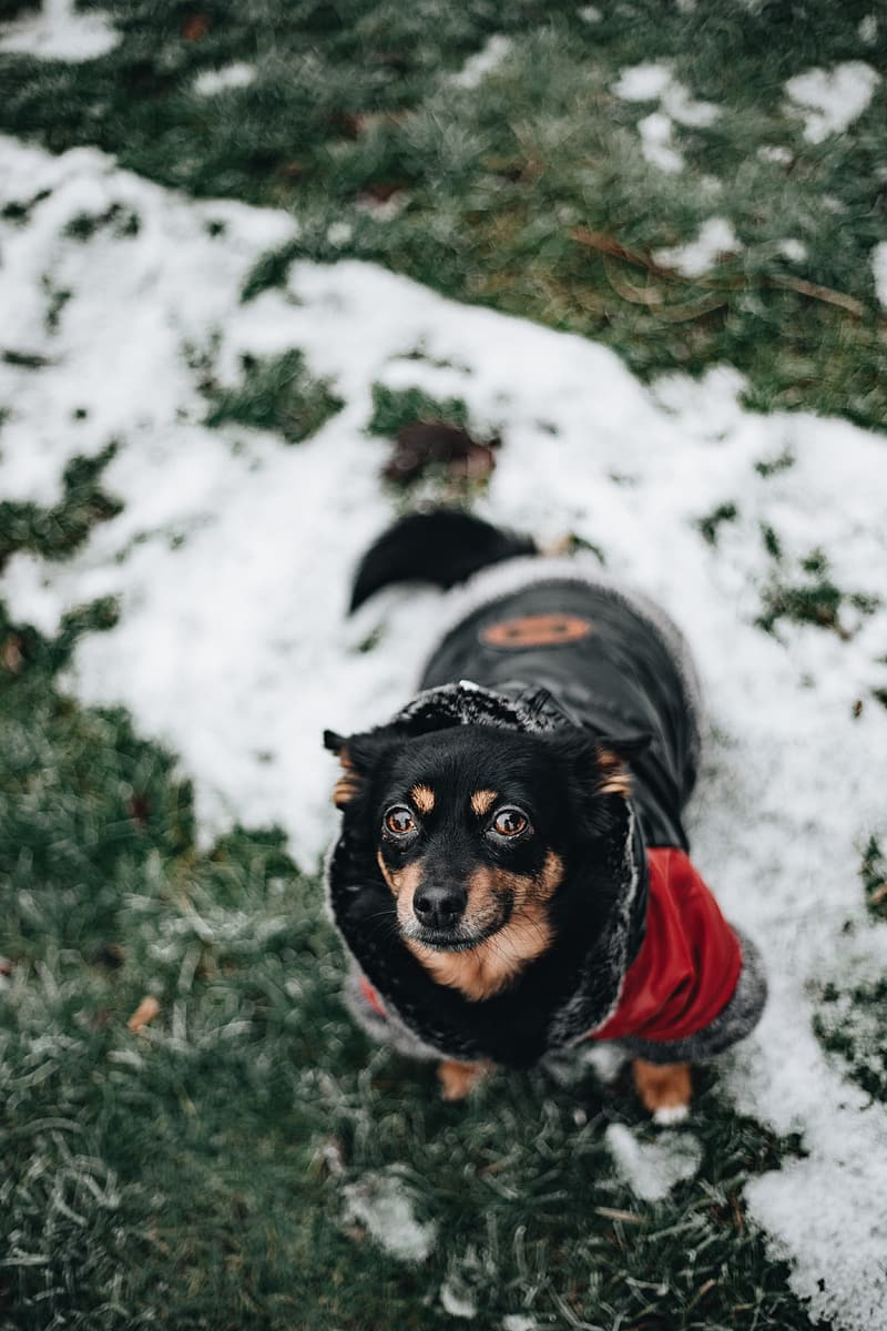 Small dog with warm jacket