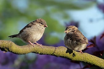 Two brown birds on top of tree branch during daytime