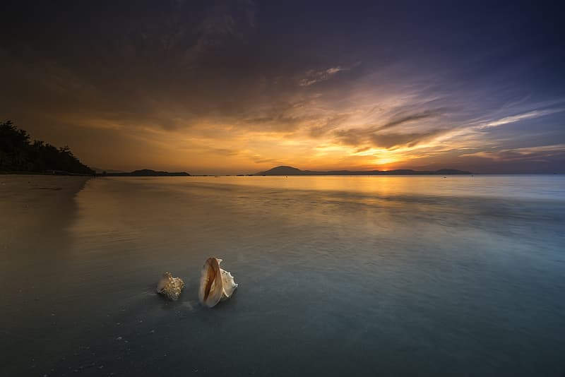 Photo of two sea shells on shore during golden hour