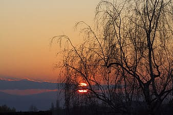 Bare trees near body of water during sunset