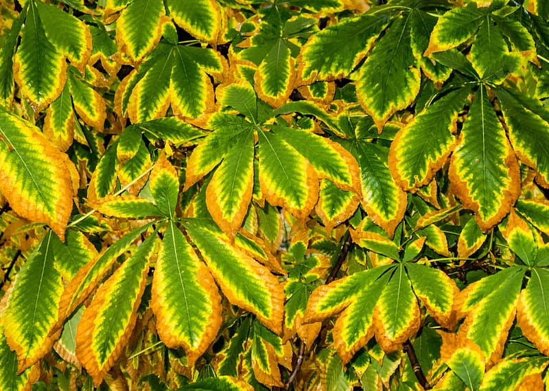 Green and brown leaves