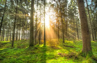 Landscape photography of trees facing sun rays
