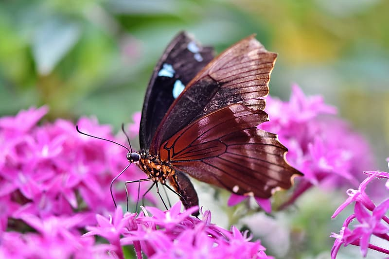 Black and brown butterfly on purple flower