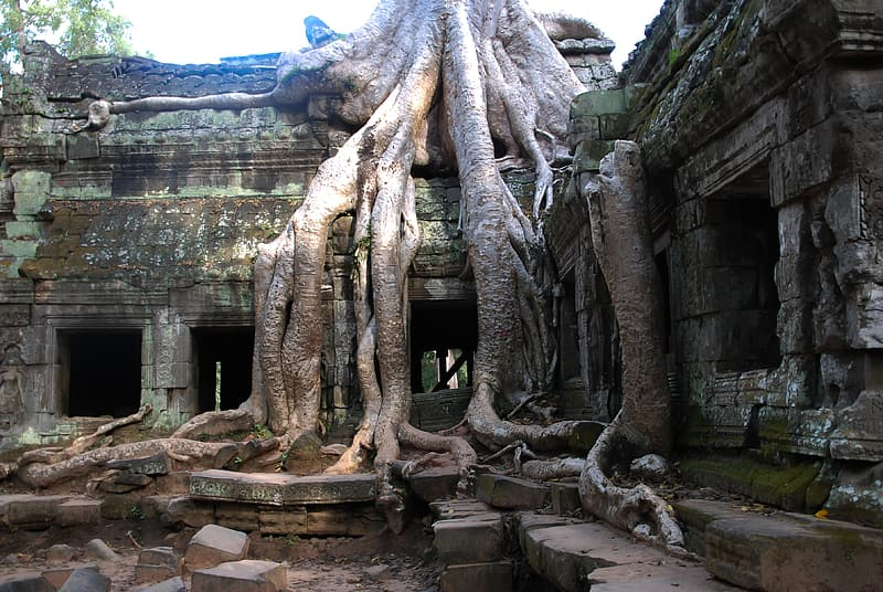 Concrete building with tree root