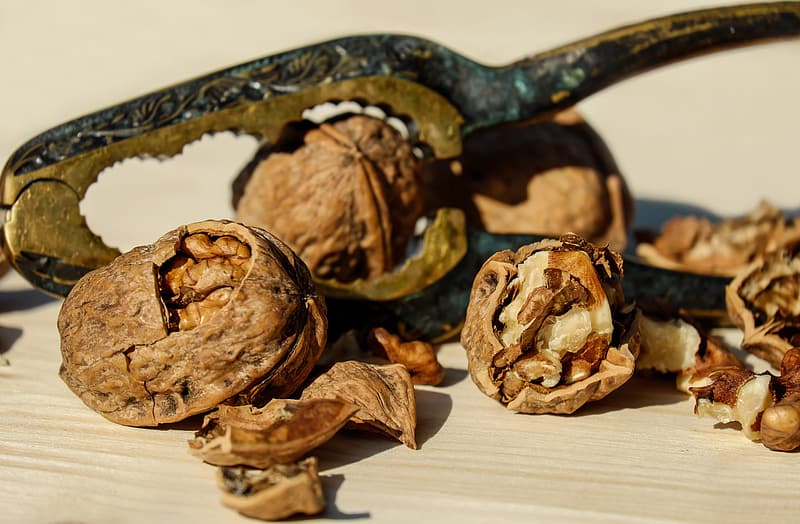 Close up photo of walnuts