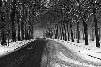 Grayscale photo of road between bare trees