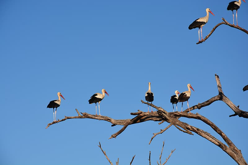 Birds perched on tree branches