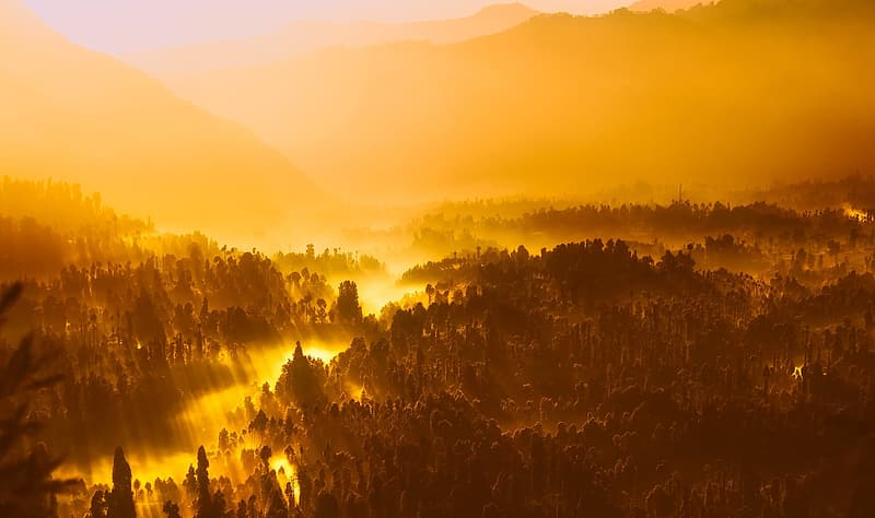 Top view of forest during yellow sunset