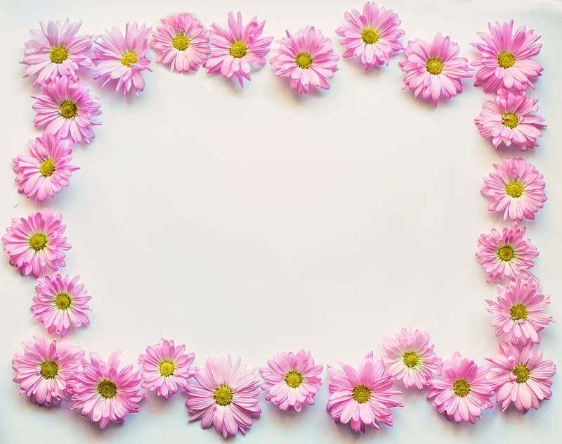 Pink petal flower on white surface