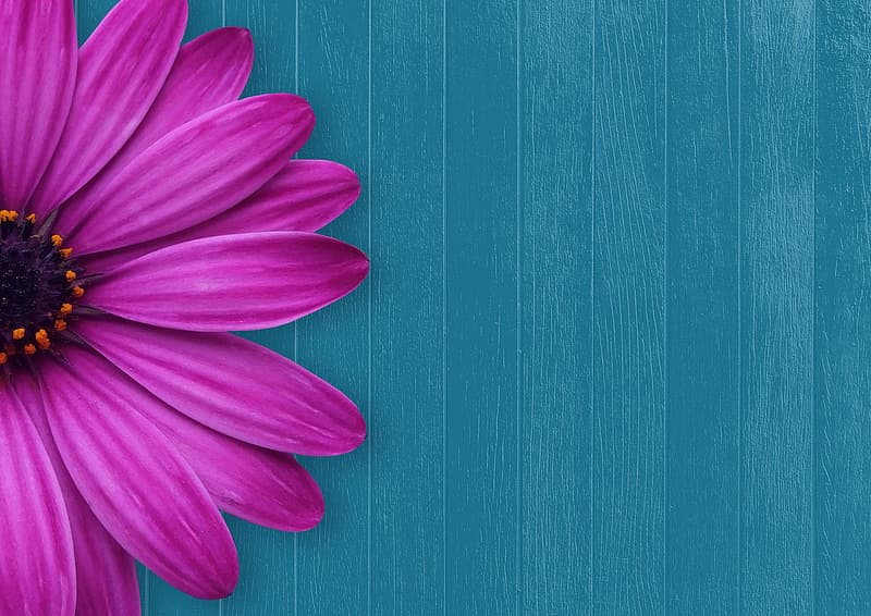 Pink flower on green wooden surface