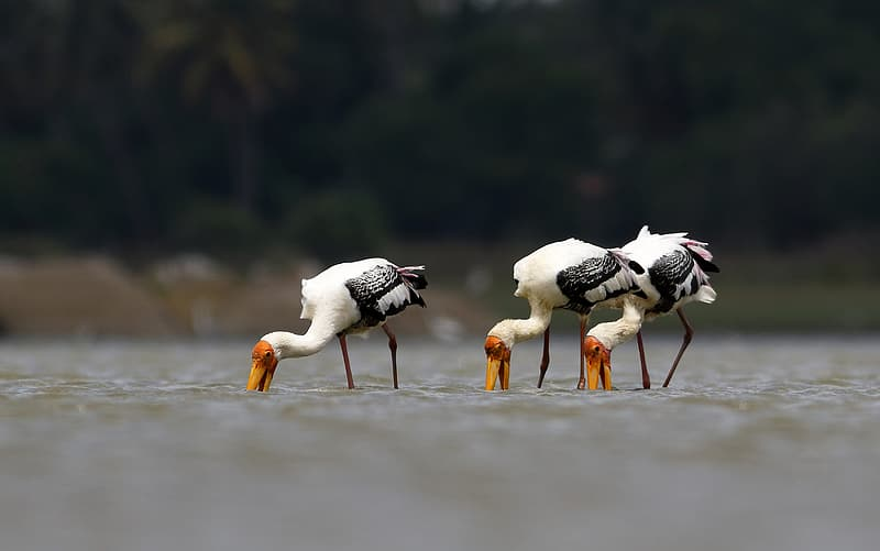 White and black birds on water