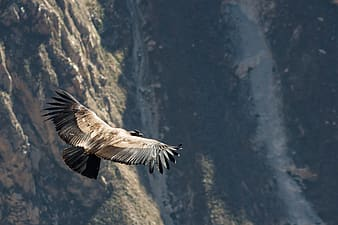Brown and white bird flying over the mountain during daytime