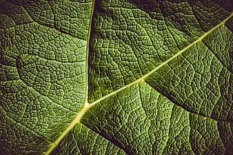 Close up shot of green leaf