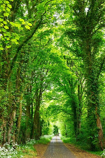 Road between green trees