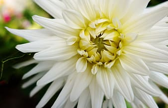 White and yellow flower in macro photography