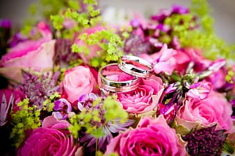 Two silver-colored rings over pink petal flower