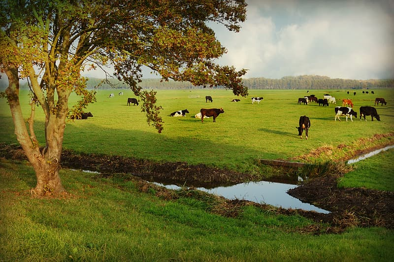 Horses on green grass field near lake during daytime