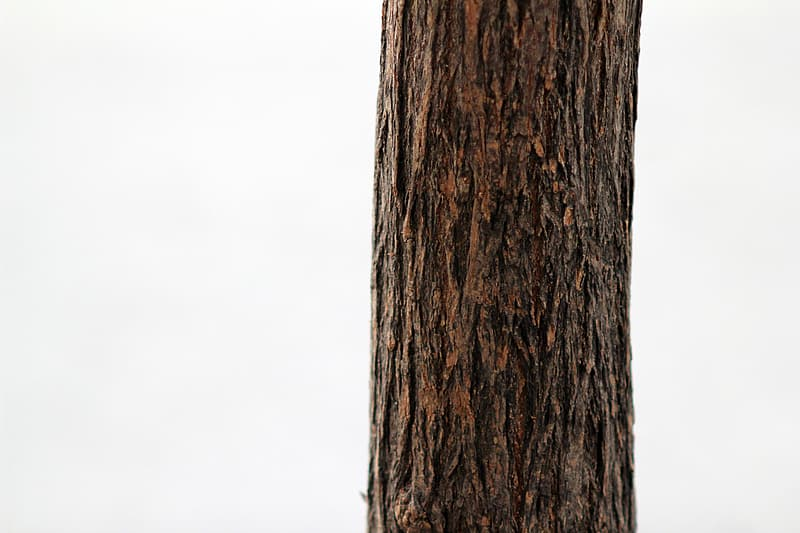 Brown tree trunk photograph
