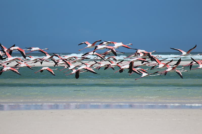Flock of flamingos flying above shore