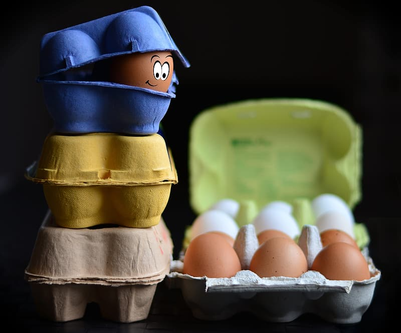 Three blue, yellow, and brown poultry of eggs photography