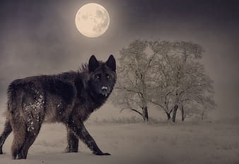 Black wolf standing on snow covered ground during night time