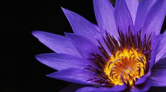 Closeup photography of purple petaled flower