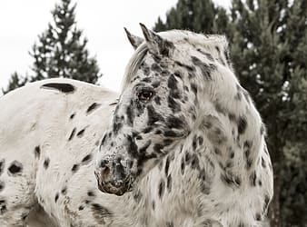 White and black spotted horse under bright sky
