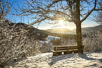 Brown wooden bench on snow covered ground during daytime