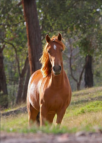 Selective focus photography of brown horse standing in green grass field