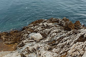 Gray rocky shore during daytime