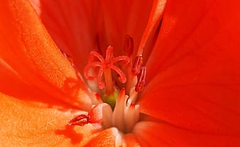 Close-up photography of red petaled flower