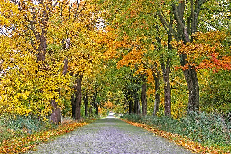 Gray pathway between yellow and green trees during daytime