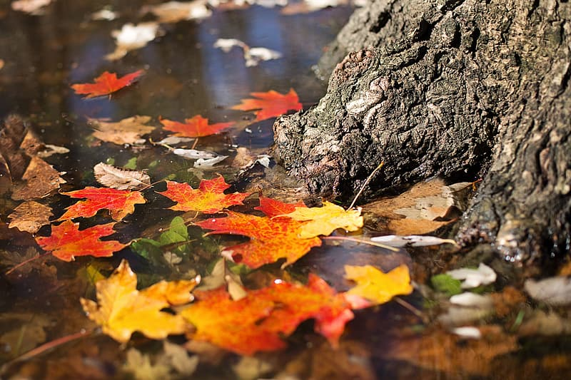 Brown and brown leaves on body of water